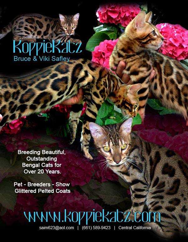 KoppieKatz Bengal Kittens, World Class Show Cats